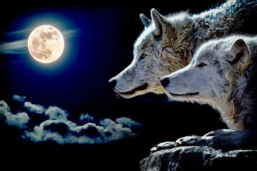Wolf Canvas Wall Art -  Moon Wolfs